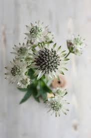 Wildflower Arrangements by 13 Best De Border Van Je Dromen Images On Pinterest Garden Ideas