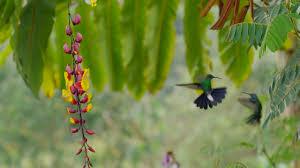 super hummingbirds hummingbirds battle in the air nature pbs