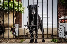 Evenflo Home Decor Stair Gate Puppy Gate Best Swinging Pet Gate Dog N Treats