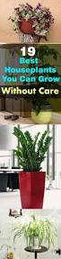 Best Indoor Plants Low Light by Remarkable Prepossessing Hanging House Plants Low Light House