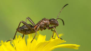 hilfe gegen haushaltsschädlinge vitagate hilfe gegen ameisen ungeziefer 1 x 1 erste hilfe gegen ameisen