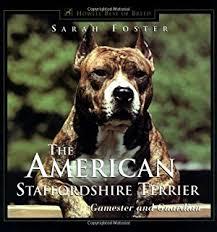 american pitbull terrier akc american staffordshire terrier american staffordshire terrier