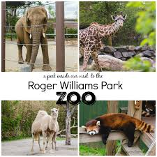 a visit to the roger williams park zoo rhode island plain