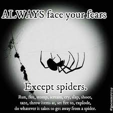 Best 25 Spider Meme Ideas - best 25 spider humor ideas on pinterest pictures of spiders