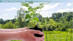 What Is Growth Movement Of A Plant Toward Light Called What Is Seed Germination Definition Process Steps U0026 Factors