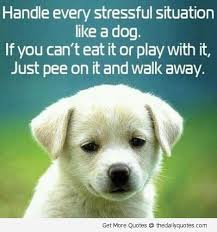 funny bichon frise quotes 139 best pets images on pinterest animals funny animals and dog