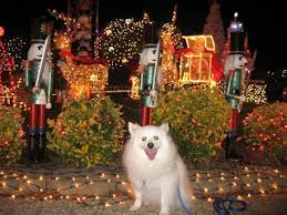american eskimo dog odor casper d dog hi my name is casper i am a mini american eskimo