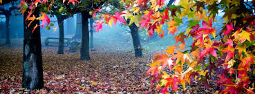 colourfull leaves fb hd cover photo hd wallpapers best quality