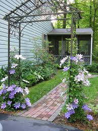 clematis on a metal arbor as a transition into the garden