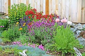 re landscaping to shrubs and perennials hometalk