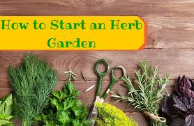 Gardening For Beginners Vegetables by How To Grow Your Own Herbs For Cooking Sparkpeople