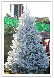 deerbrooke farm specialities premium trees in las