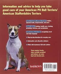 american pitbull terrier info american pit bull terriers american staffordshire terriers