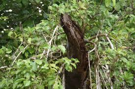 australia 2016 part 4 daintree rainforest ramblingrazorback
