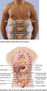 Human Physiology And Anatomy Book Best 25 Medical Anatomy Ideas Only On Pinterest Medicine