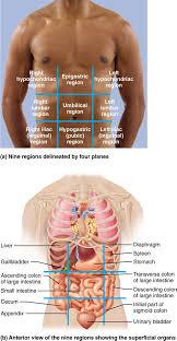 Human Anatomy Anterior Best 25 Physiology Ideas On Pinterest Human Anatomy And