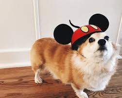 boxer halloween costume for dog dogs wearing mickey mouse ears popsugar pets
