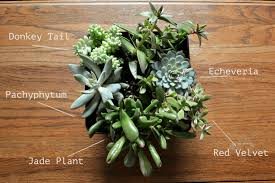 plants native to mexico succulent love crooked housewife