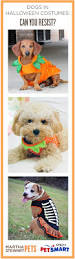 Martha Stewart Dog Halloween Costumes 91 Halloween Costumes Images Halloween Stuff