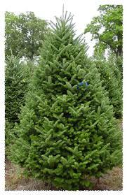 gorman tree farm monee il 60449