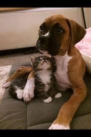 boxer dog jokes awwww cuddle buddies u003c3 my friend pinterest cuddling
