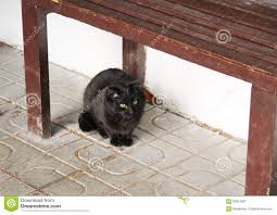 cat under the bench stock photo image 63651887