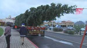 nation u0027s tallest christmas tree arrives in anthem arizona u0027s family