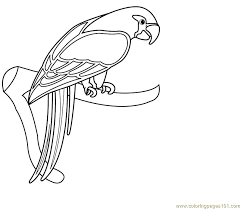 parrot coloring pages eassume coloringeast
