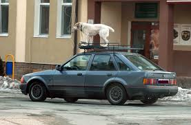 bulgaria sungurlare dog on roof rack on a moving car gearheads org