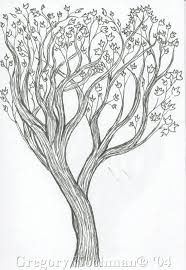 photos draw a tree with leaves drawing art gallery