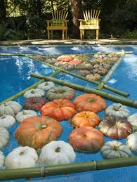 Fall Backyard Party Ideas by Halloween Pool Decorations Haywardpinyourpool Pool Party Time