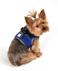 Comfortable Dog Dog Harness Guide Making Sure Your Dog Is Comfortable U2013 Top Dog Tips