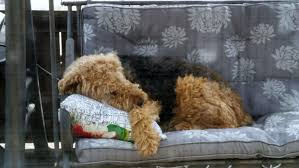 Replacement Cushions For Martha Stewart Patio Furniture by Kmart Martha Stewart Amelia Island Swing Replacement Cushion
