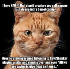 Stupid Cat Meme - just plain stupid cats have things to say