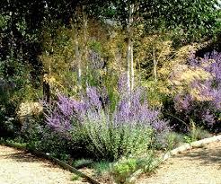 small ornamental grasses with purple flowers ornamental grass