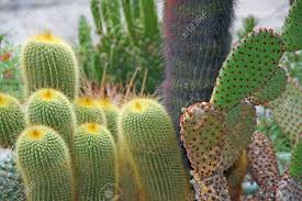 Succulent And Cacti Pictures Gallery Garden Design Garden Design Garden Design With Succulents And Cactus With Very