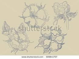 hand drawn cotton plant vector download free vector art stock