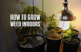 proper lights for growing weed how to grow weed indoors the definitive guide