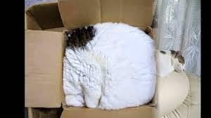 Borad Panda by 30 Cats Who Have Mastered The Art Of Sleep Fu Boredpanda