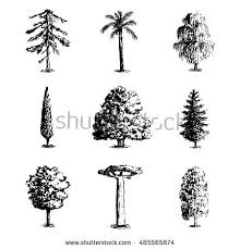 cypress tree stock images royalty free images u0026 vectors