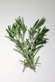 herbe cuisine 8 herbes aromatiques à avoir impérativement dans sa cuisine les