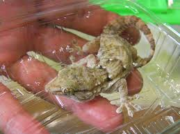 fa軋de cuisine leroy merlin debon 熱帯魚館 ブログ 爬虫類コーナー ニューラインアップ