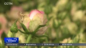 flower companies flower companies project a 30 boost in global sales