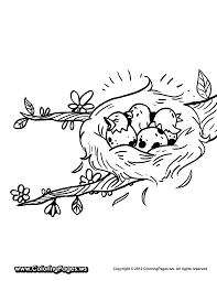 nest coloring page coloring home