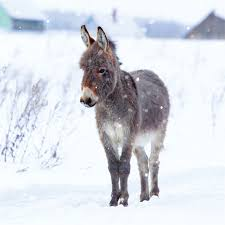 ling 6 pack charity christmas cards donkey in snow 13 5cm