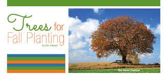 trees for fall planting visitvortex magazine articles