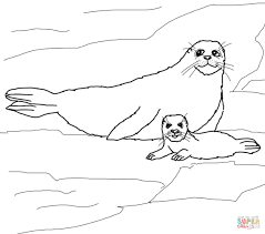 harp seal mother and baby coloring page free printable coloring
