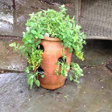 Garden Crafts For Children - our herb tasting tower thanks to garden crafts for children by
