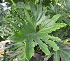 a breath of fresh air houseplants fairview garden center