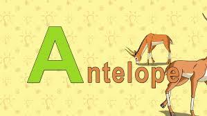 dolphin english zoo alphabet letter d animation english